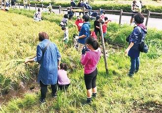 稲刈りを楽しむ地域住民