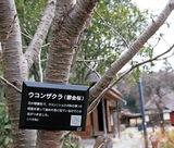 樹名板に二次元コード