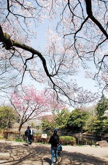 水の広場すぐ上の池で咲く早咲きの桜=3月18日撮影