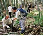 獅子ヶ谷市民の森で行われたタケノコ掘り