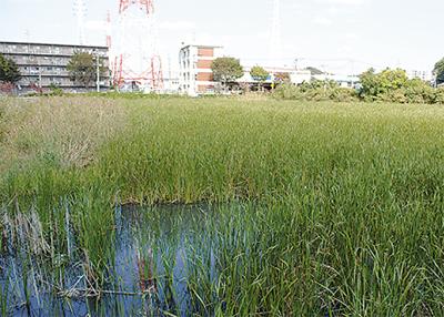 二ツ池、公園化で着工へ