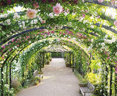 1700品種のバラ最盛期