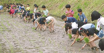 平安小児童 群馬で田植え
