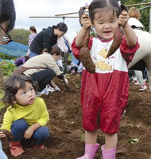 泥だらけになりながらサツマイモを収穫した子どもたち