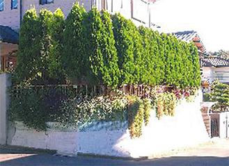 民有地での沿道緑化の様子