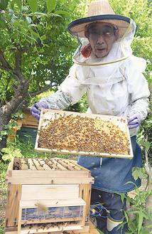 ミツバチの巣箱を広げる出川さん