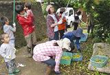 梅の実を収穫する参加者