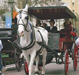 通りを馬車や人力車が往来する