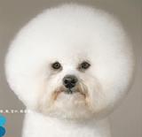 10周年記念の広告犬