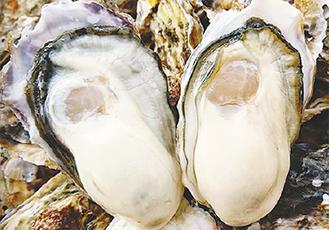 まるまる太った夏牡蠣