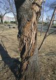 43本に倒木の危険性