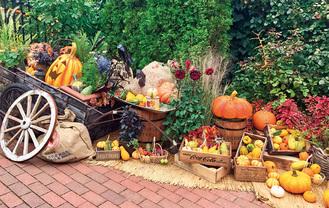 ハロウィン装飾は人気のフォトスポット