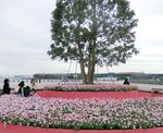 港に面した場所には高さ7mのシンボルツリーとマーガレットの丘が出現