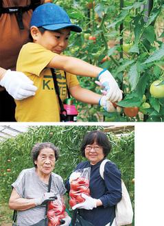 ▲親子でトマトを収穫赤く熟したトマトを袋いっぱいに◀