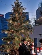 光瞬く…クリスマスツリー