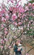 春爛漫 紅梅鮮やか