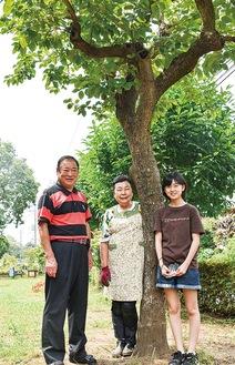 樹齢約100年の柿の木と、つつじ広場の清掃を行っている田中さん一家