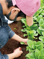 地元野菜で商品開発