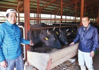 黒毛和牛を飼育する平本政和さん(右)と息子の洋右さん