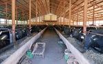 牛舎では70頭ほどが飼育される