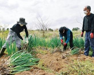 畑仕事を体験する社員を指導する八ッ橋さん(右)