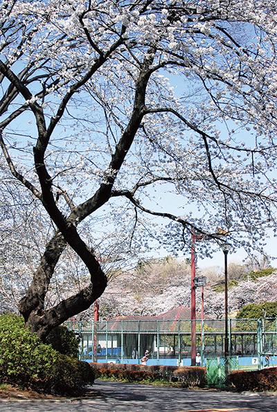 桜の開花、史上2番目