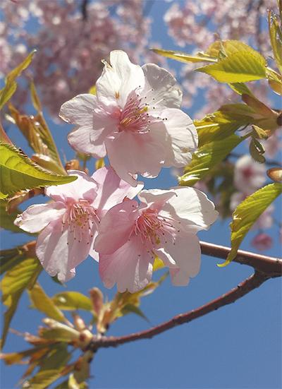 春の息吹、すぐそこに
