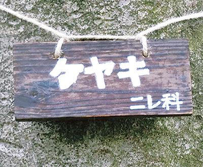 子安台公園で樹名板づくり