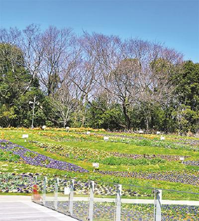 フェア開始時の大花壇