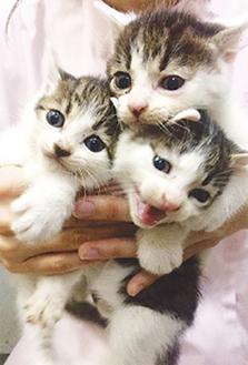 生後1カ月の仔猫