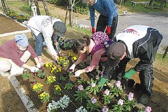 提供された花苗を植える市民団体のメンバー