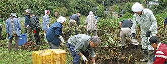 収穫作業を楽しむ参加者ら