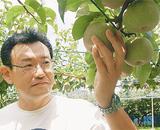 梨の出来を確かめる持田篤史さん