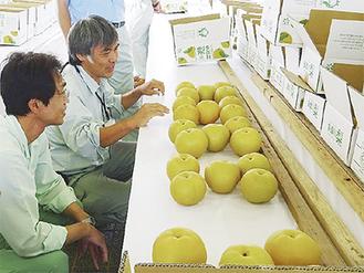 梨を品定めする審査員ら