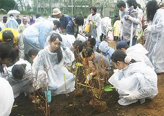 ミツバツツジ、シモツケ、ミツマタ等が植えられた