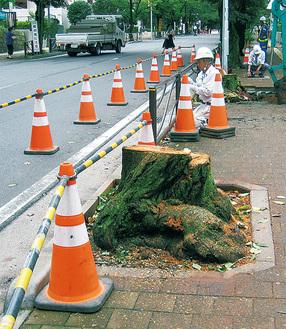 伐採された桜の木 読者提供=8月9日撮影