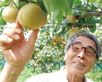 梨の生育状況を確認する持田正さん