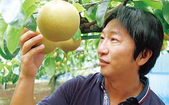 梨の出来栄えを確認する持田誠さん