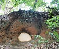 防空壕か?謎の洞穴