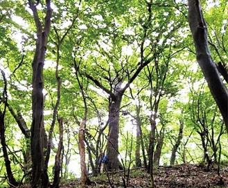 樹林地が残存する緑地(市提供)