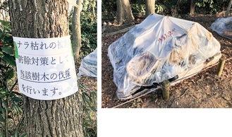 伐採を告知する張り紙と燻蒸している樹木=3月同公園