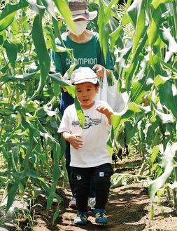 多くの家族連れが訪れて巨大トウモロコシ迷路を楽しんだ(17日)