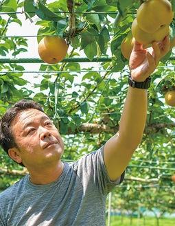 梨の状態を確認する川名さん