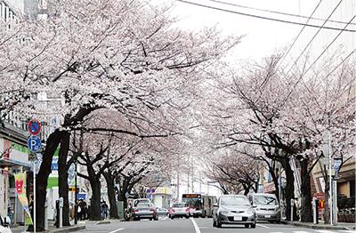 桜並木の保全を考える