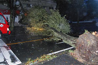 区内各地で倒木被害
