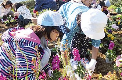 宮崎の花植え全国で優秀賞
