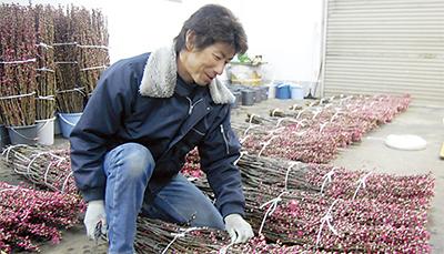馬絹の花桃が旬