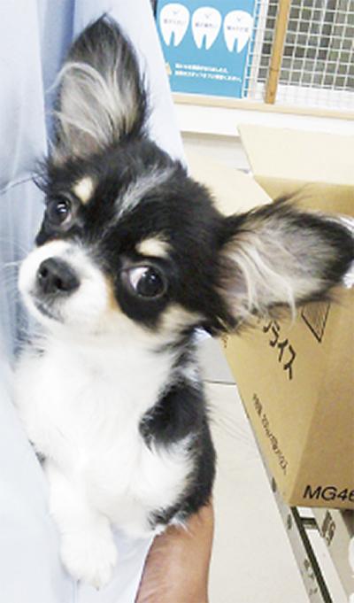 仔犬の飼い主募集中