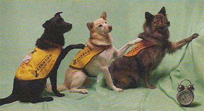 「聴導犬の存在知って」