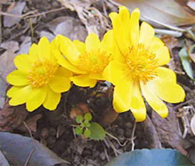 冬の花が見頃